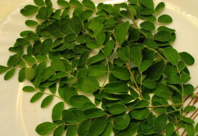cara membuat teh daun kelor sendiri
