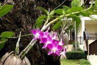 cara menanam anggrek dengan sabut kelapa