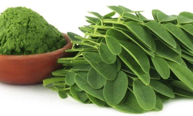 manfaat daun kelor untuk kesehatana