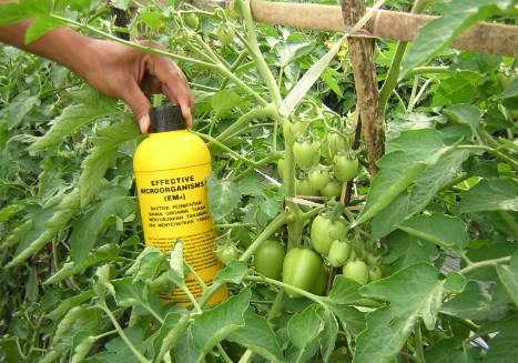 Manfaat EM4 untuk Kesuburan Tanah dan kandungannya