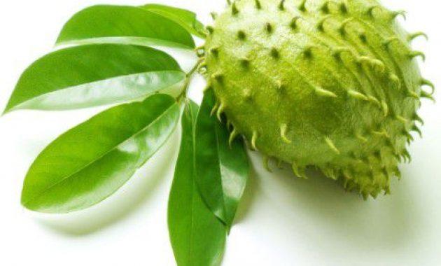 manfaat buah sirsak untuk kolesterol dan kesehatan