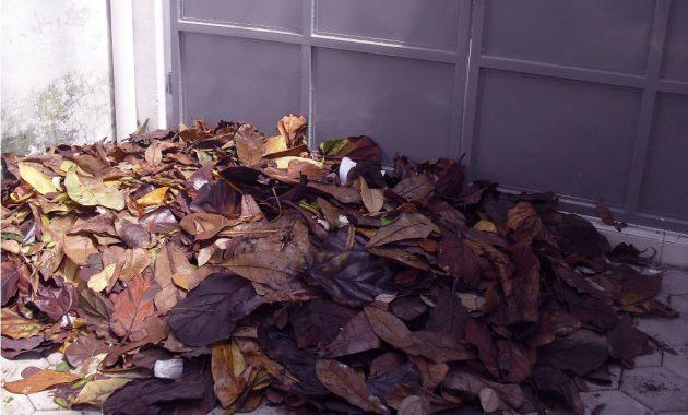 cara membuat pupuk dari daun kering