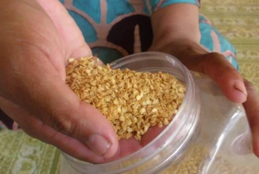 cara menanam cabai rawit dari biji